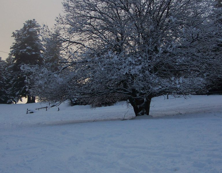 A tree covered with snow